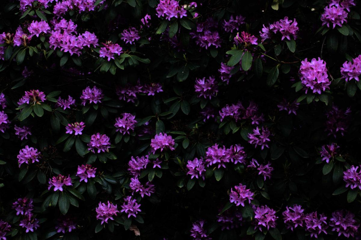 Philodendron - Ausschnitt